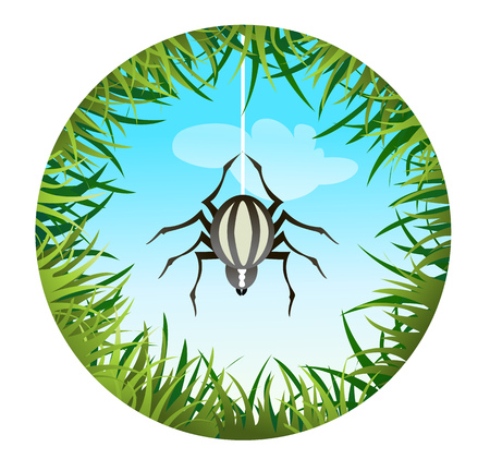 sedge: Insects and summer nature icon. spider hanging on the web