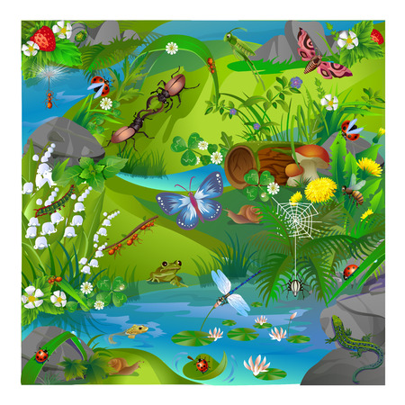 sedge: vector illustration of summer life in the forest insects. Images of dragonflies, ladybirds, ants, butterfly, grasshopper, snail, spider, bee and frog and lizard. Illustration