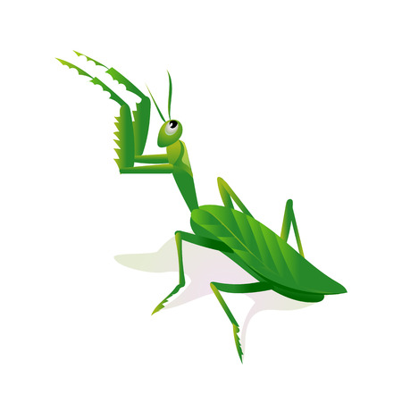 Mantis in an attacking pose, minimalist image on white background 矢量图像