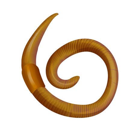 Vector Animal Earth Red Wurm zum Fischen isoliert auf weißem Hintergrund Standard-Bild - 75348528