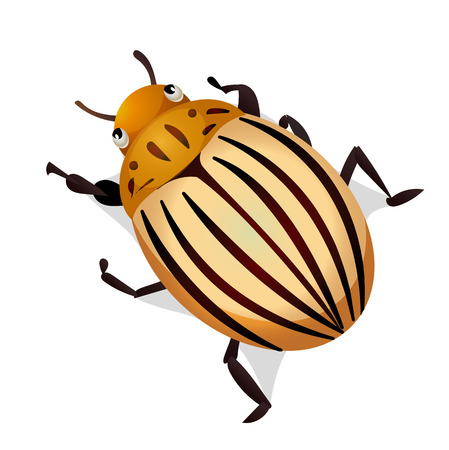 the wrecker: Vector illustration of colorado potato beetle isolated on white background Illustration