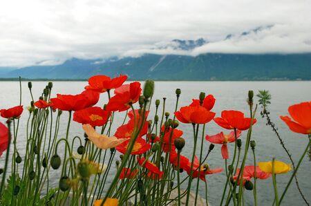 leman: red poppy. Lake Leman, Switzerland Stock Photo