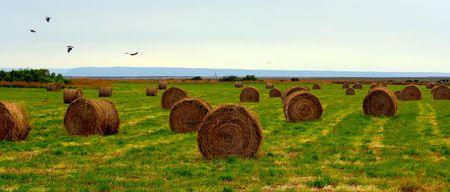 harvests: Harvests Stock Photo