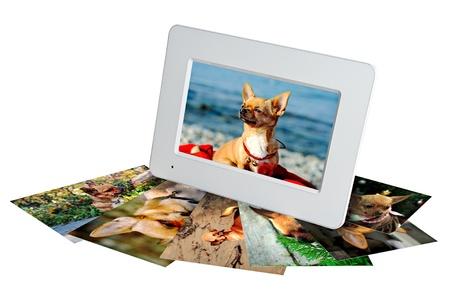 crop margin: blanco marco de fotos digital con fotos de un chihuahua aislado en el fondo blanco Foto de archivo