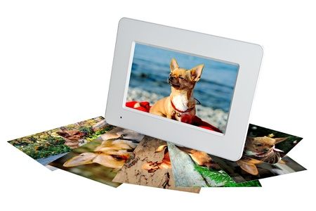 white digital photo frame with photos of a chihuahua isolated on the white background