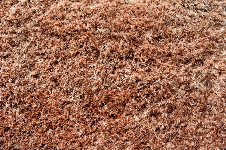 Carpet or rug texture  photo