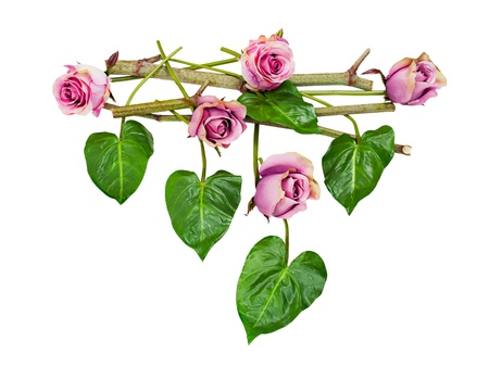 composition of purple roses and leaves and pieces of bamboo isolated on white background