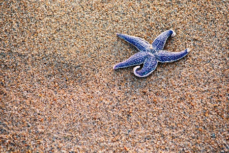summer composition - starfish with sand as background, selective focus  photo