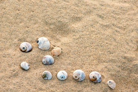 summer composition - sea shells with sand as background, selective focus  photo