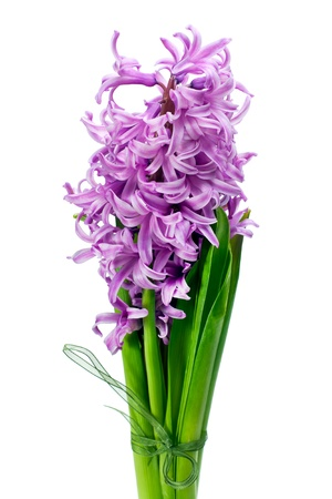 colorful bouquet from hyacinth arrangement centerpiece isolated on white background  Banco de Imagens