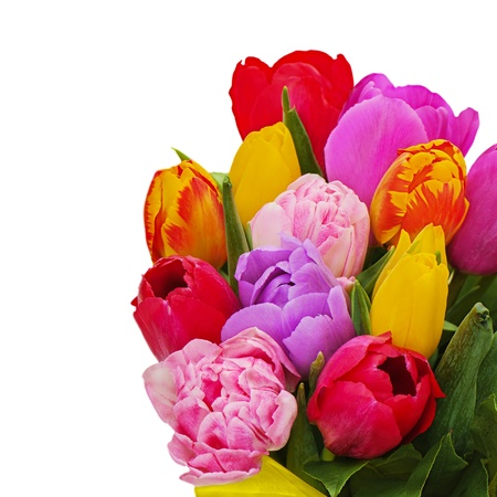 Fragment of floral bouquet from colorful tulips isolated on white background. Stock Photo - 18388514