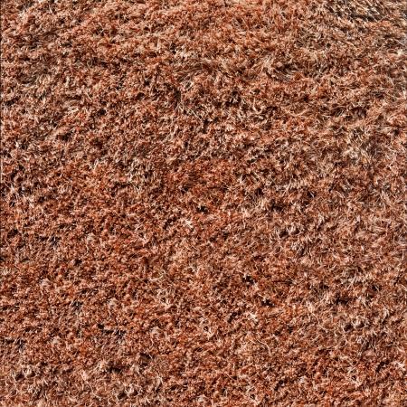 rug texture: Carpet or rug texture. Closeup.