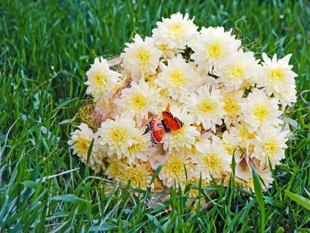 Bouquet from yellow asters with butterfly on green grass. Closeup. photo