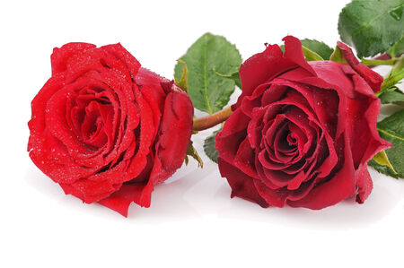 Red roses isolated on white background. Closeup. photo
