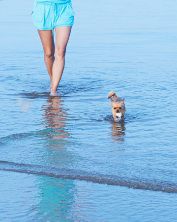 Woman legs and red chihuahua dog in sea water. photo