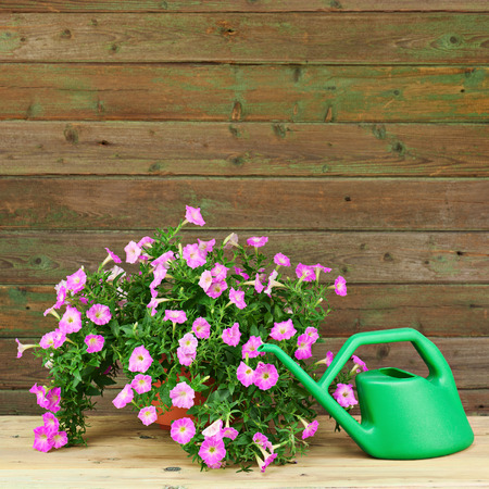 Pink Petunia Flowers In Flowerpot With Garden Accessories On Wooden  Background. Stock Photo   30182632