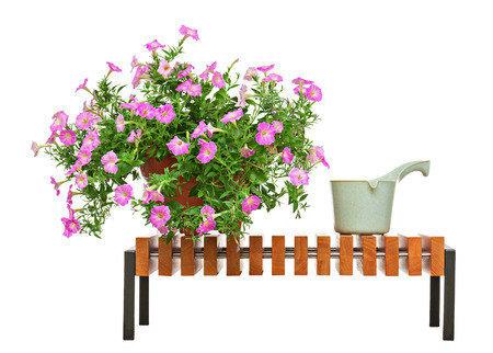 Pink petunia flowers in flowerpot on wooden bench with garden accessories isolated on white background. photo