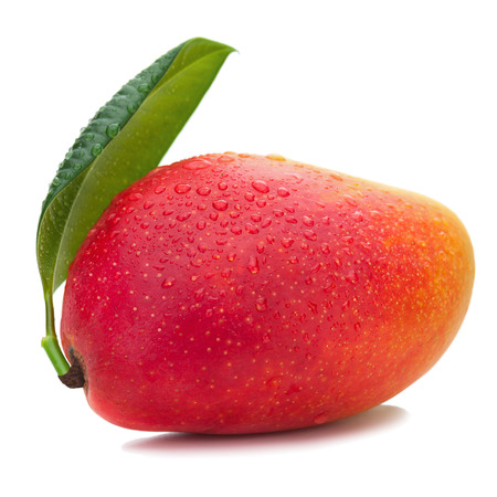 mango fruta: Fruta fresca del mango con las hojas verdes aisladas en el fondo blanco. De Cerca.