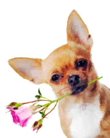 cane chihuahua: Cane della chihuahua con rosa isolato su sfondo bianco in stile basso poli. progettazione poly Low triangolare cane chihuahua. Archivio Fotografico