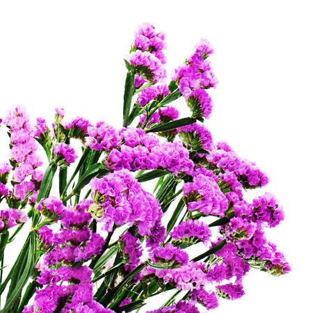 Bouquet from purple statice flowers isolated on white background bouquet from purple statice flowers isolated on white background closeup stock photo 66734882 mightylinksfo