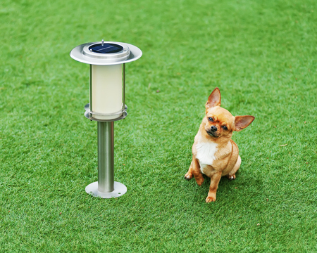 Red chihuahua dog siting on green grass near solar powered lamp. Stock Photo