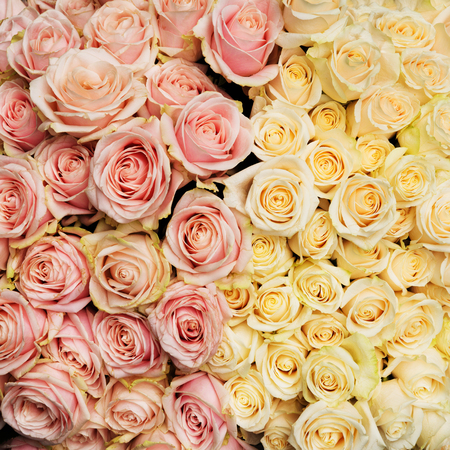 Bouquet of fresh, vintage roses. Natural flowers background.
