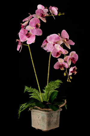 Floral arrangement from artificial orchid flowers in old ceramic flower pot on black background.