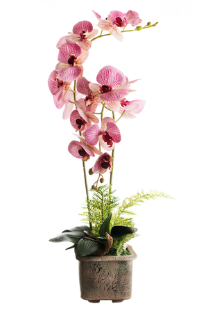 Floral arrangement from artificial orchid flowers in old ceramic flower pot isolated on white background.
