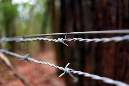 Barbed wire closing off a section of forrest Stock Photo