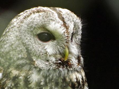 Bird of prey Stockfoto