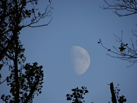 The moon is in the sky in broad daylight between the trees