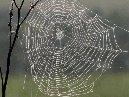 Cobweb in morning dew, Geismar, Hesse