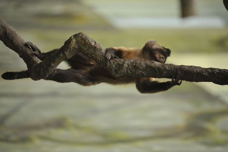 monkey holding onto a vine in the rain forest