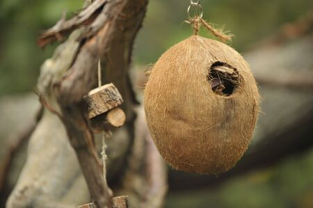 Coconut bird house hanging from tree Stock Photo