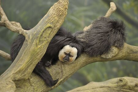 male and female monkeys resting on a tree branch in the rain forest