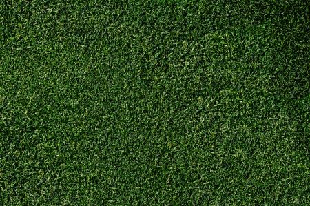 Closeup of turf on a putting green