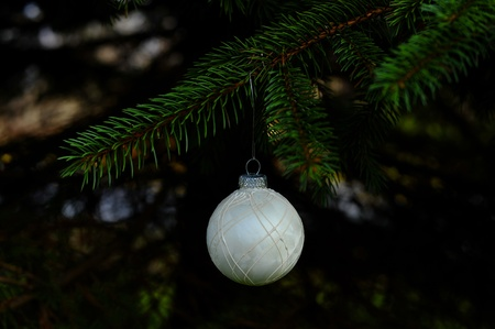 White Christmas bulb hanging in a tree Stock Photo