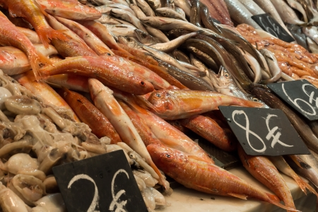 Variety of fish at the local market photo