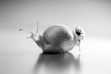 Little snail riding on a big snail. The big snail is taking care about the little one.