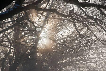 A misty winter photo