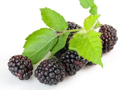 Juicy ripe blackberries on a white background
