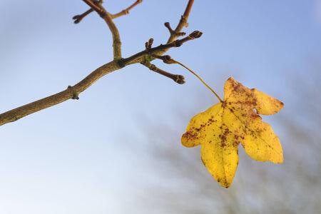 The last leaf of autumn against a sunny blue sky photo