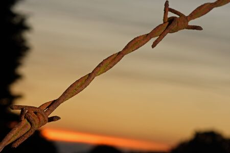 invade: Close up of an old, rusted piece of barbwire (barbed wire) at sunset. Border concept. Shallow d o f.