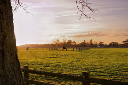 Horses grazing in a paddock in an autumn sunset