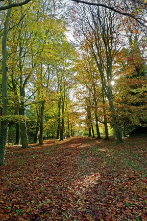 A path through the woods in Autumn Stock Photo