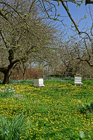 Old bee hives amongst wild flowers in an orchard in spring.