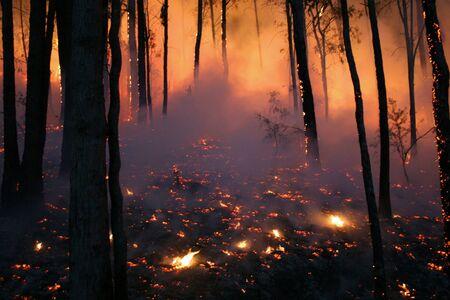 BushfireWildfire closeup at night photo