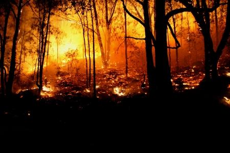 夜の森林火災・野火のクローズ アップ