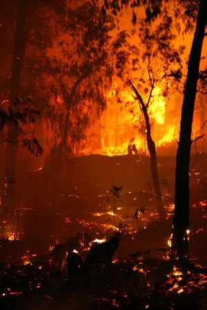 Bushfire/Wildfire closeup at night Stock Photo - 3749439