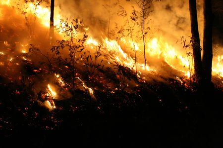 Bushfire/Wildfire closeup at night. Taken at a wildfire in 2007. Stock Photo - 3804216